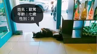 星期三有故事的酒-歐罵(柴犬)